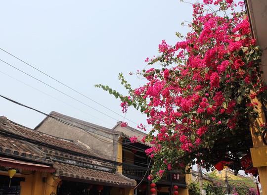 Ngắm nhà cổ Hội An đẹp lịm tim với giàn hoa giấy - Ảnh 10.