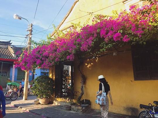 Ngắm nhà cổ Hội An đẹp lịm tim với giàn hoa giấy - Ảnh 4.
