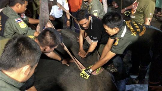 Thái Lan: Để voi bị điện giật chết khi xin ăn, chủ bị bắt - Ảnh 1.