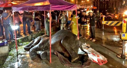 Thái Lan: Để voi bị điện giật chết khi xin ăn, chủ bị bắt - Ảnh 2.