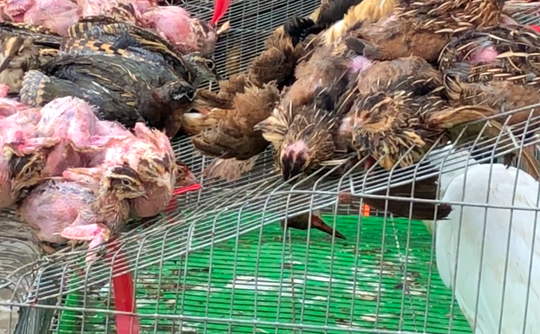 Nhiều bức xúc về video tàn sát chim trời ở chợ chim miền Tây - Ảnh 2.