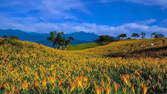 Chiêm ngưỡng xứ sở hoa kim châm đẹp như tranh vẽ ở Đài Loan - Ảnh 1.