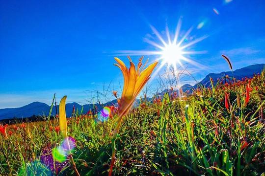 Chiêm ngưỡng xứ sở hoa kim châm đẹp như tranh vẽ ở Đài Loan - Ảnh 2.