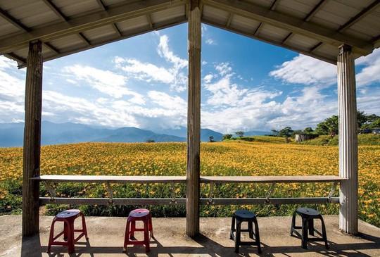 Chiêm ngưỡng xứ sở hoa kim châm đẹp như tranh vẽ ở Đài Loan - Ảnh 12.