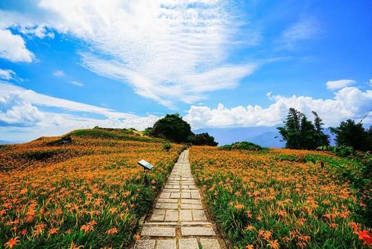 Chiêm ngưỡng xứ sở hoa kim châm đẹp như tranh vẽ ở Đài Loan - Ảnh 3.