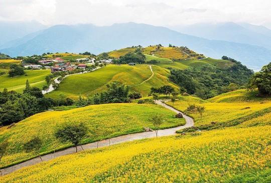Chiêm ngưỡng xứ sở hoa kim châm đẹp như tranh vẽ ở Đài Loan - Ảnh 4.
