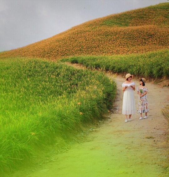 Chiêm ngưỡng xứ sở hoa kim châm đẹp như tranh vẽ ở Đài Loan - Ảnh 8.