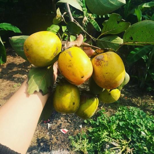 5 món quà vặt đặc trưng của mùa thu Hà Nội - Ảnh 4.