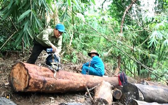 Vụ phá rừng ở Lâm Đồng: Sự thật có bị bẻ cong? - Ảnh 1.