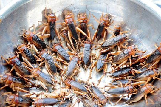 Dế chiên nước mắm ở Long Khánh ăn là ghiền - Ảnh 3.