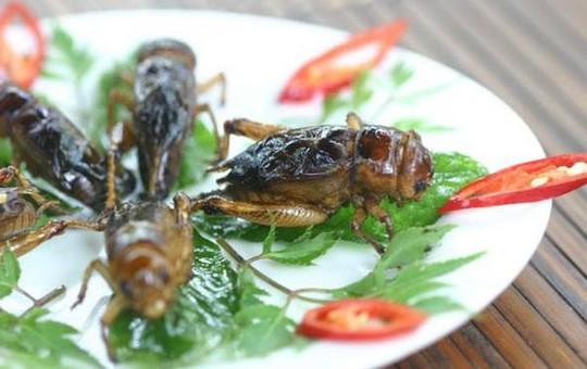 Dế chiên nước mắm ở Long Khánh ăn là ghiền - Ảnh 5.