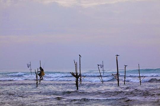 Nghệ thuật câu cá trên cọc kheo của các ngư dân Sri Lanka - Ảnh 5.
