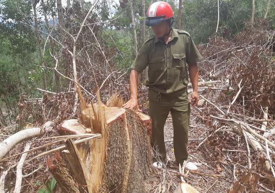 Khám nghiệm hiện trường vụ Tàn sát rừng phòng hộ - Ảnh 1.