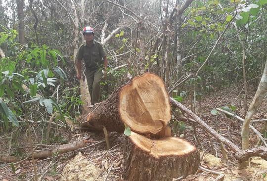 Khám nghiệm hiện trường vụ Tàn sát rừng phòng hộ - Ảnh 3.