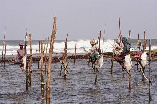 Nghệ thuật câu cá trên cọc kheo của các ngư dân Sri Lanka - Ảnh 8.