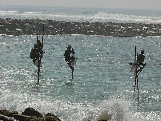Nghệ thuật câu cá trên cọc kheo của các ngư dân Sri Lanka - Ảnh 2.
