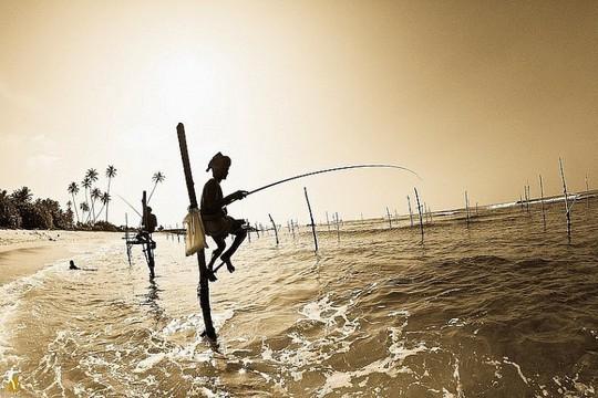 Nghệ thuật câu cá trên cọc kheo của các ngư dân Sri Lanka - Ảnh 3.