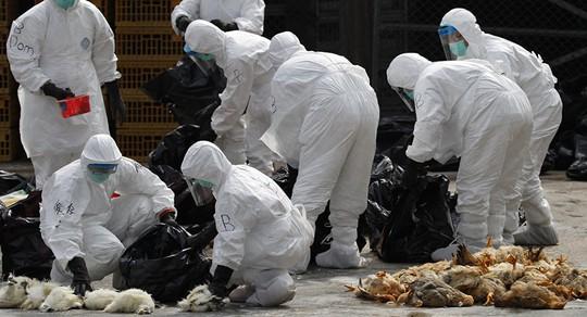 Trung Quốc gây lo ngại về dịch H7N9 - Ảnh 1.