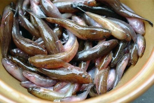 Đua nhau săn con cá nhỏ nhưng độc ở đầm Chuồn - Ảnh 3.
