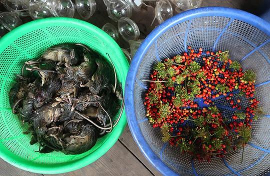 Đặc sản chuột ăn hạt sâm đãi khách quý ở núi Ngọc Linh - Ảnh 3.