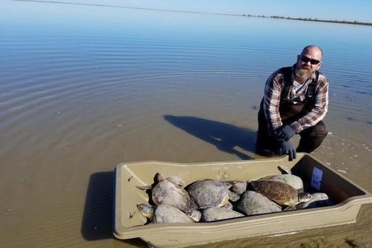 Kỳ nhông, rùa biển hóa đá vì bom bão tuyết ở Mỹ - Ảnh 6.
