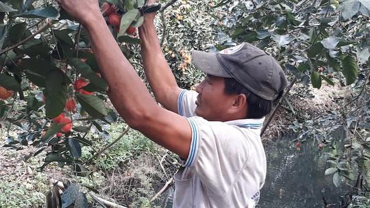 Cận Tết, giá trái cây đặc sản ở miền Tây cao ngất ngưởng - Ảnh 1.