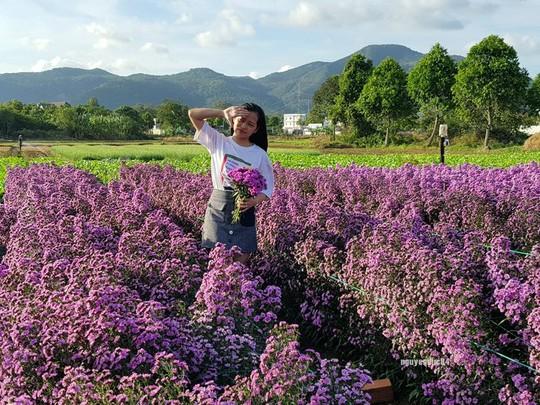 Vườn hoa thạch thảo đang gây sốt ở Bà Rịa - Vũng Tàu - Ảnh 3.