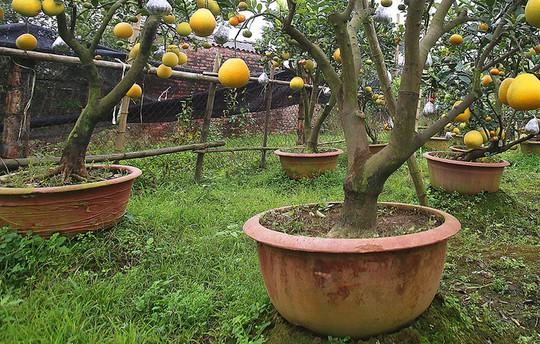 Trồng cây 11 loại quả bán dịp Tết - Ảnh 4.
