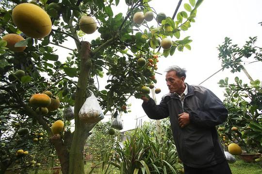 Trồng cây 11 loại quả bán dịp Tết - Ảnh 5.