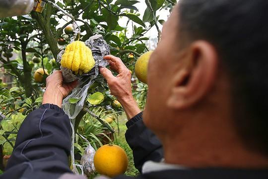 Trồng cây 11 loại quả bán dịp Tết - Ảnh 6.