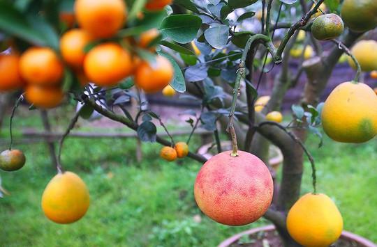 Trồng cây 11 loại quả bán dịp Tết - Ảnh 7.