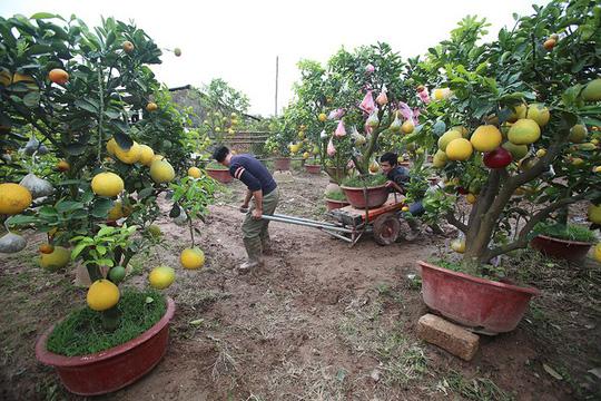 Trồng cây 11 loại quả bán dịp Tết - Ảnh 9.