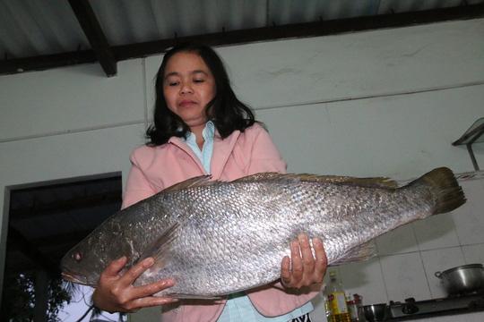 Bắt được cá lạ nghi cá sủ vàng quý hiếm dài gần 1 m - Ảnh 3.