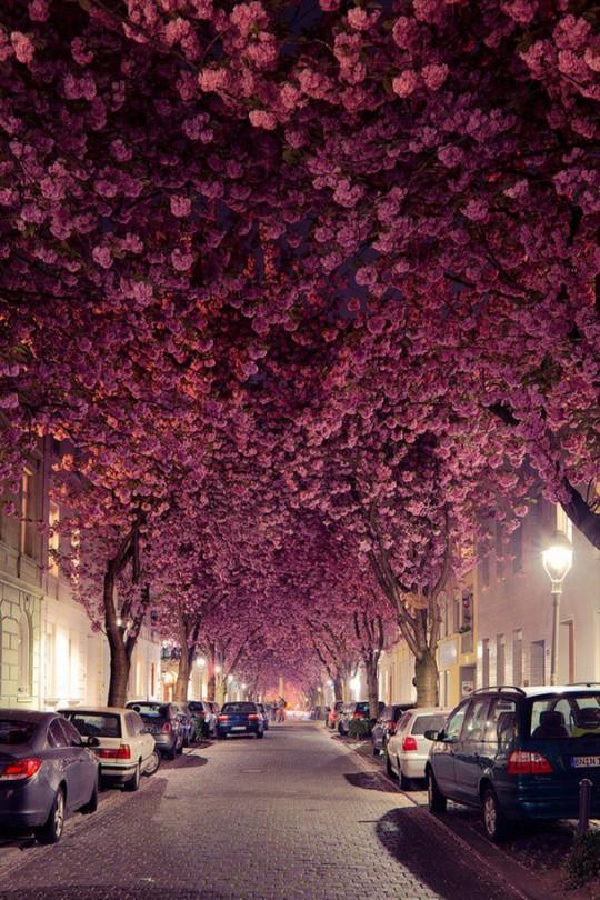 25 đường phố đẹp và đáng sống nhất thế giới - Ảnh 1.
