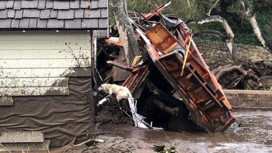 Một chú chó cứu hộ tìm kiếm nạn nhân ở khu vực Montecito. Ảnh: Reuters