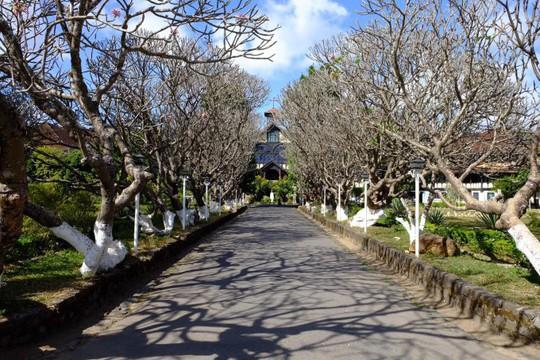 Những con đường ở Tây Nguyên đẹp như cảnh trên phim Hàn - Ảnh 1.