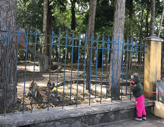 Khỉ liên tục tấn công người ở Tây Ninh - Ảnh 1.
