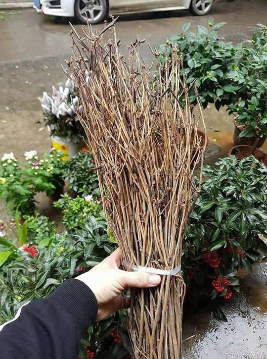 Hoa ngủ đông: Như củi khô nhưng nở rất đẹp - Ảnh 2.