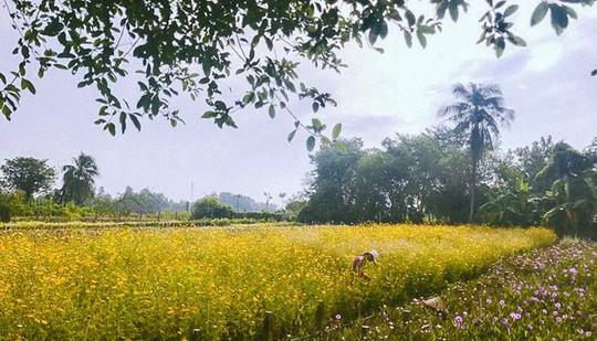 Không thể tin nổi giữa Sài Gòn có cánh đồng hoa đẹp đến thế! - Ảnh 1.