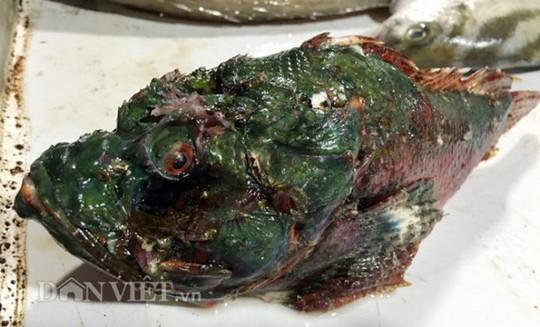 """Những đặc sản siêu """"độc"""" từ 4 loài cá xấu xí - Ảnh 1."""