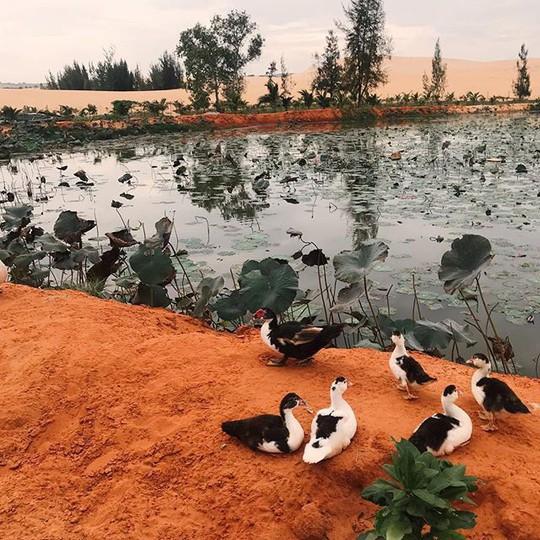 """Check in """"ốc đảo xanh giữa lòng sa mạc"""" đang gây sốt ở Bình Thuận - Ảnh 2."""