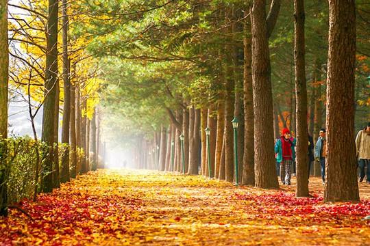 Mùa thu tại hòn đảo trong phim Bản tình ca mùa đông - Ảnh 2.