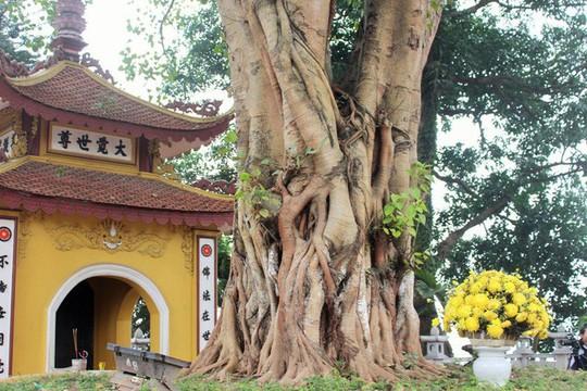 Cận cảnh ngôi chùa đẹp bậc nhất thế giới ở Hà Nội - Ảnh 11.