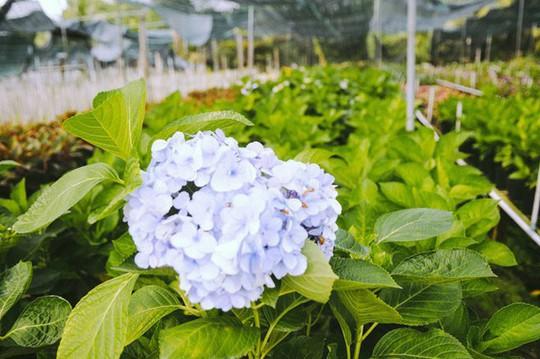 Không thể tin nổi giữa Sài Gòn có cánh đồng hoa đẹp đến thế! - Ảnh 12.