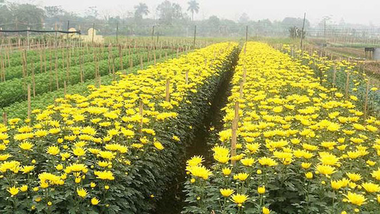 Hà Nội có thêm làng hoa Tây Tựu quy mô lớn - Ảnh 12.