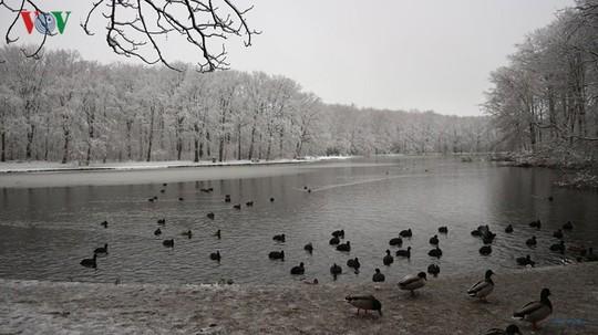 Đẹp nao lòng mùa đông ở Hà Lan - Ảnh 15.