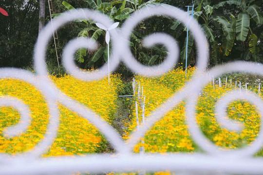 Không thể tin nổi giữa Sài Gòn có cánh đồng hoa đẹp đến thế! - Ảnh 15.