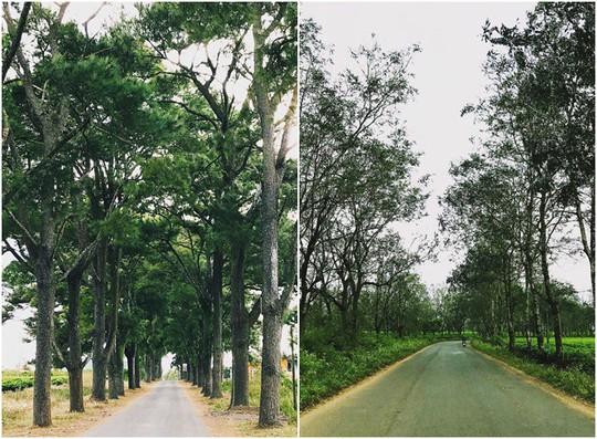 Những con đường ở Tây Nguyên đẹp như cảnh trên phim Hàn - Ảnh 3.