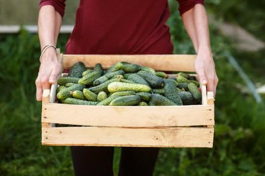 10 thực phẩm hằng ngày giúp cơ thể giải độc tự nhiên - Ảnh 1.
