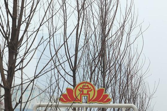 Ngắm hàng phong lá đỏ châu Âu lần đầu tiên được trồng ở HN - Ảnh 3.